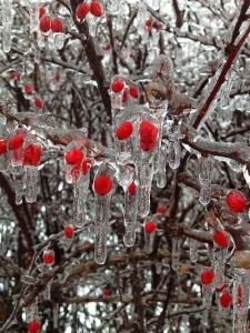 berries-302341_640