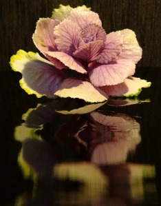 cabbage-flower-204087_640