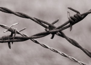 barbed-wire-345760_640