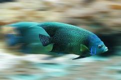 fish-582695_640