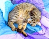 cat-114629_640