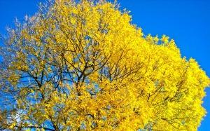 tree-246194_640