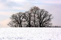 winter-1153669_640