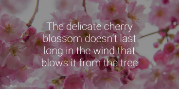 "Poster saying ""The delicate cherry blossom doesn't last long in the wind that blows it from the tree."""
