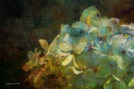 Blue Hydrangea Sunset Impressiion by Steven W. Ward