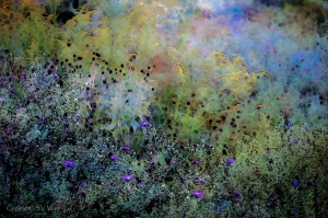 Digital Watercolor Field of Wildflowers by Steven V. Ward