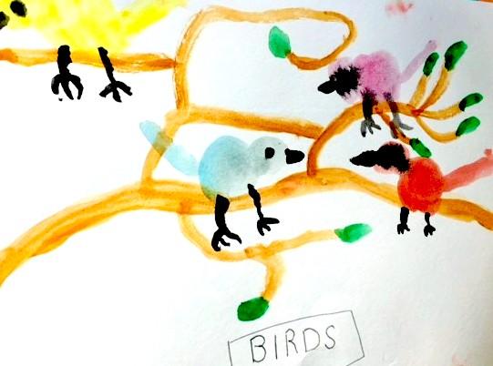 Meir's birds 2