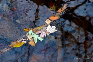 Leaves floating on water with reflections