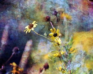 Yellow Wildflowers on an impressionis style background