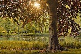 Tree and grass near a pond