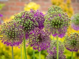Green and purple flowers